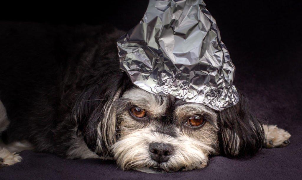 Tinfoil hat dog